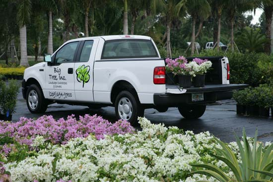 Big Tree Landscape Maintenance Services